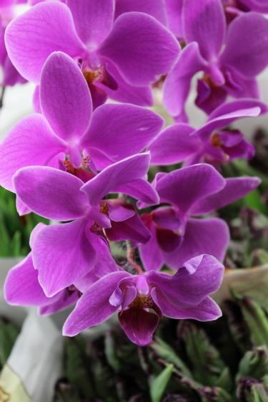 Orchds, Purple Orchids, New York Flower Market, Flower Market, Posh Floral Designs, Wedding Flowers