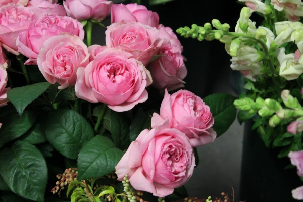 Hot Pink Garden Roses | Eco Flowers | American Grown Flowers | Slow Flowers