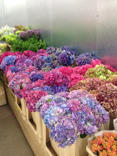 Hydrangeas, Chapel Designers, Posh Floral Designs, New York Flower District, Social media