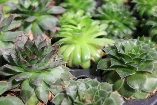 Mini Succulents | Chapel Designers | Floral Conference