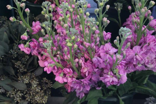 Purple Stock | American Grown Flowers | Eco Flowers | Slow Flowers | Chapel Designers